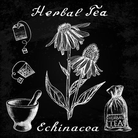 medical herbs: Echinacea hand drawn sketch botanical illustration. Vector drawing. Herbal tea elements - tea bag, bag, mortar and pestle. Medical herbs. Lettering in English languages. Effect chalk board