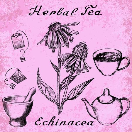 herbal tea: Echinacea hand drawn sketch botanical illustration. Vector drawing. Herbal tea elements - cup, teapot, kettle, tea bag, bag, mortar and pestle. Medical herbs. Lettering in English. Grunge background