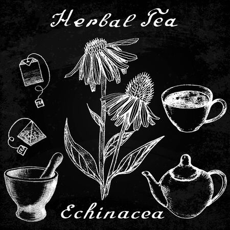 medical herbs: Echinacea hand drawn sketch botanical illustration. Vector drawing. Herbal tea elements - cup, teapot, kettle, tea bag, bag, mortar and pestle. Medical herbs. Lettering in English. Effect chalk board