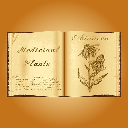 herbalist: Echinacea. Ejemplo bot�nico. plantas medicinales. Viejo herbolario libro abierto. fondo del grunge. ilustraci�n vectorial