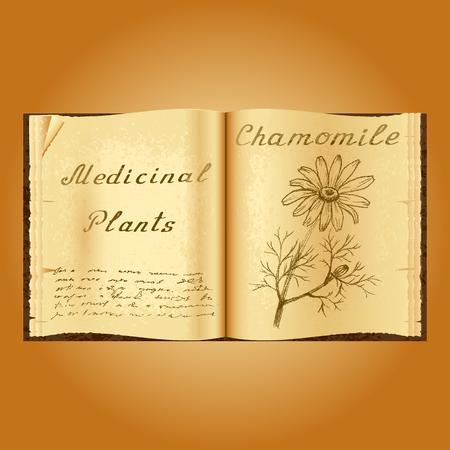 herbalist: Chamomile. Botanical illustration. Medical plants. Old open book herbalist. Grunge background Stock Photo