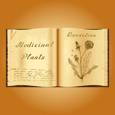 herbalist: Diente de le�n. Ejemplo bot�nico. plantas medicinales. Viejo herbolario libro abierto. fondo del grunge