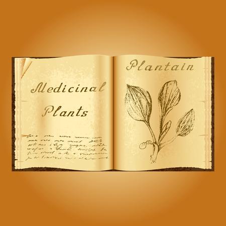 herbolaria: Plátano. Ejemplo botánico. plantas medicinales. Viejo herbolario libro abierto. fondo del grunge