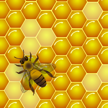 Vector bee and honeycombs texture background. For honey package, tag or wrapping.