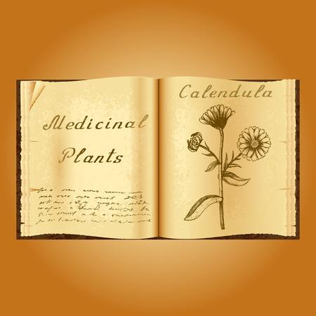 herbolaria: Caléndula. Ejemplo botánico. plantas medicinales. Viejo herbolario libro abierto. fondo del grunge. ilustración vectorial