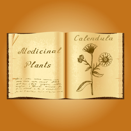 calendula: Calendula. Botanical illustration. Medical plants. Old open book herbalist. Grunge background. Vector illustration