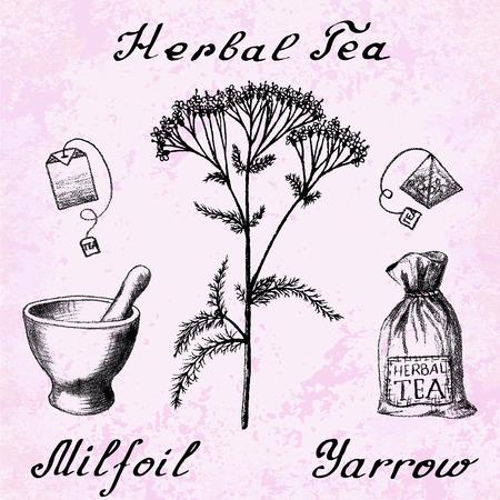 Yarrow Achillea millefolium hand drawn botanical illustration. drawing. Herbal tea elements - tea bag, bag, mortar and pestle. Medical herbs. Lettering in English languages. Grunge background