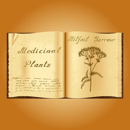 herbolaria: Yarrow Achillea millefolium. Ejemplo botánico. plantas medicinales. Viejo herbolario libro abierto. fondo del grunge. ilustración Vectores