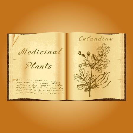 herbolaria: Celidonia mayor. Ejemplo botánico. plantas medicinales. Viejo herbolario libro abierto. fondo del grunge. ilustración Vectores