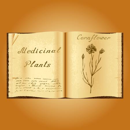 herbolaria: Florecimiento de maíz. Ejemplo botánico. plantas medicinales. Viejo herbolario libro abierto. fondo del grunge. ilustración