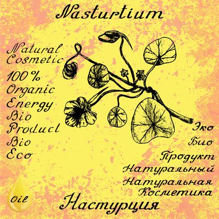 nasturtium: Nasturtium drawn sketch botanical illustration. illustation. Medical herbs. Lettering in English and Russian languages. Grunge background. Oil drop Illustration