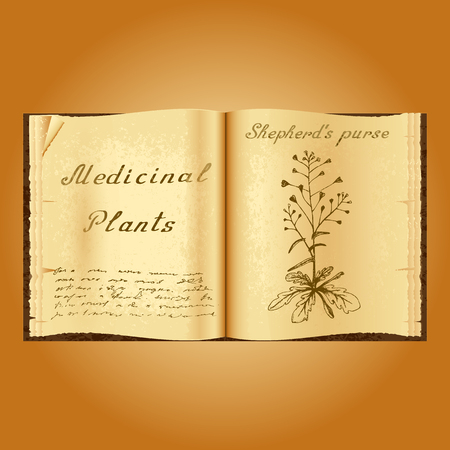 herbolaria: Shepherds purse. Botanical illustration. Medical plants. Old open book herbalist. Grunge background. illustration Vectores