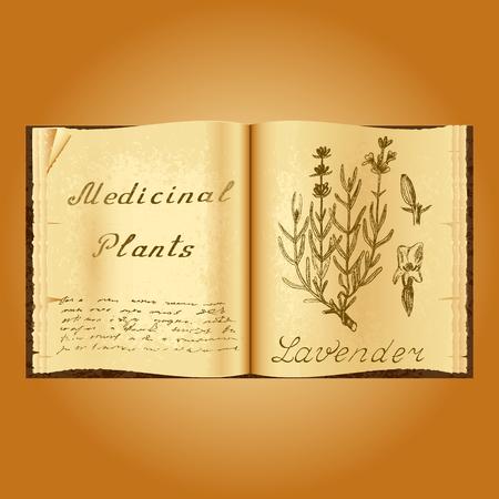 Lavender. Botanical illustration. Medical plants. Old open book herbalist. Grunge background. Vector illustration Illustration
