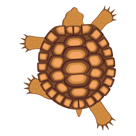 Reptile turtle. Land tortoise. View from above. Walking, running. Bright vector illustration isolated against white background