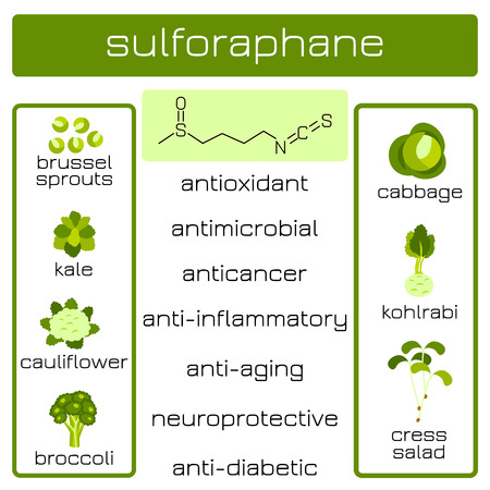 Infographics. Sulforaphane organic compound of plant origin with anti-cancer and antibacterial and others effects. Products in which it is contained 일러스트
