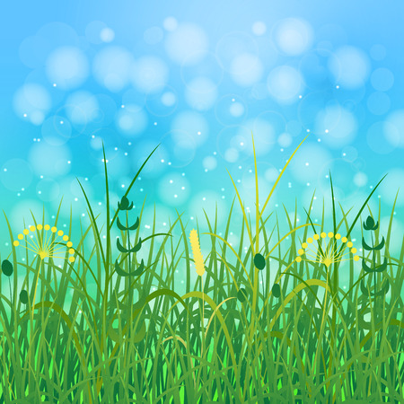 Concept Summer. Sky, blur, field grass. Rest vacation, in nature, in forest, on a country house in countryside Stock Photo