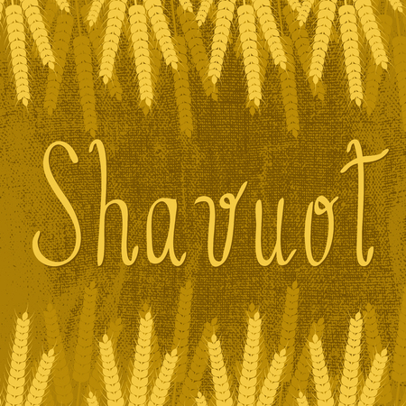 Shavuot Concept of Judaic holiday. Brown background, burlap texture, ears of wheat, text name of the holiday Vector illustration.