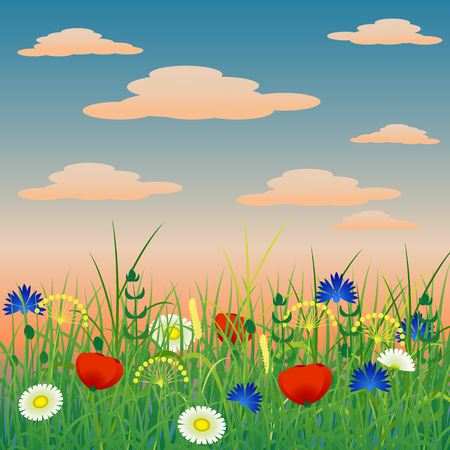 Concept Summer. Evening sky with clouds, herbs and flowers. Meadow landscape