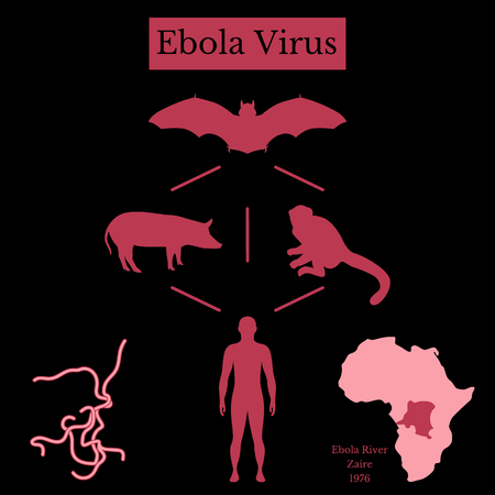 Ebola Virus. Infographics Source of disease. Bat flying fox, Pteropus lylei or Pteropodidae, pig, monkey, man, virus, map of Africa and Zaire. Black and red