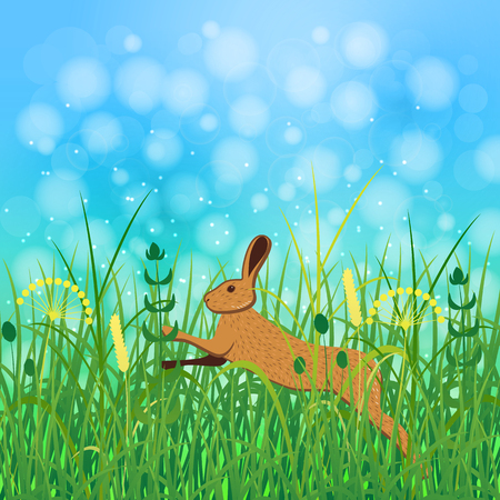 Concept Summer. Sky, blur, field grass. Rest vacation, in nature, in forest, on a country house in countryside. Hare jumps in the grass