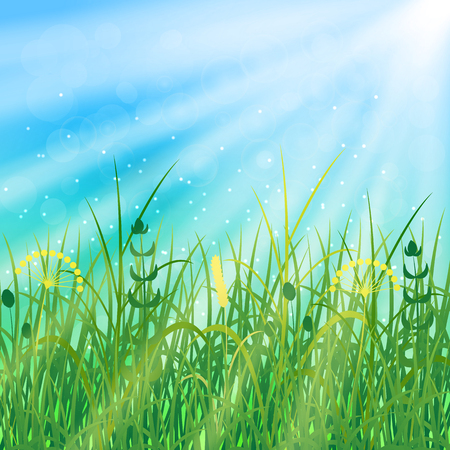 Concept Summer Solstice. Sky, blur, field grass, the lights of a sun. Rest vacation, in nature, in forest, on a country house in countryside