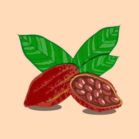 Cocoa fruits and leaves. Whole fruit, cocoa beans. Vector illustration. Chocolate Grunge texture 版權商用圖片