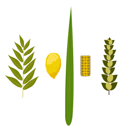 Sukkot. Concept of Judaic holiday. Traditional symbols - Etrog, lulav, hadas arava