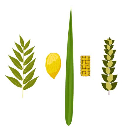 Sucot. Concepto de fiesta judaica. Símbolos tradicionales: Etrog, lulav, hadas arava