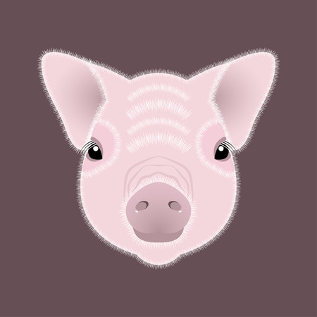 Pig, piglet. Face. Vector illustration. Nice style Chinese New Year Symbol of 2019
