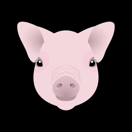 Pig, piglet. Face. Vector illustration. Nice style. Chinese New Year Symbol of 2019 Black background
