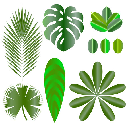 Leaves of tropical plants. Isolated items. Monstera, ficus, palm tree Schefflera Illustration