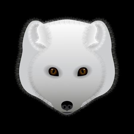 Arctic fox. Portrait, head. Predatory animal of the north. Vector illustration. Flat style Illusztráció