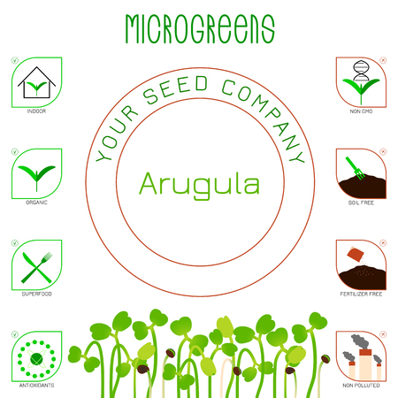 Microgreens Arugula. Seed packaging design. Icons - indoor, organic, superfood, antioxidants, non gmo, soil free, fertilizer free, non polluted