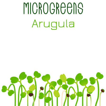 Microgreens Arugula. Seed packaging design. Sprouting seeds of a plant. Vitamin supplement, vegan food
