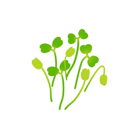 Microgreens Arugula. Bunch of plants. Vitamin supplement, vegan food