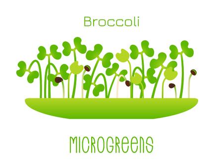 Brócoli Microgreens. Brotes en un bol. Germinación de semillas de una planta. Suplemento vitamínico, comida vegana Ilustración de vector