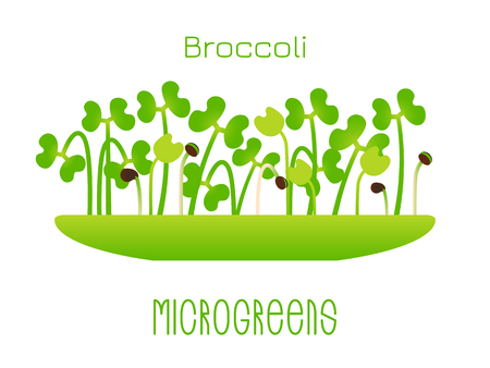 Microgreens Broccoli. Sprouts in a bowl. Sprouting seeds of a plant. Vitamin supplement, vegan food Vetores