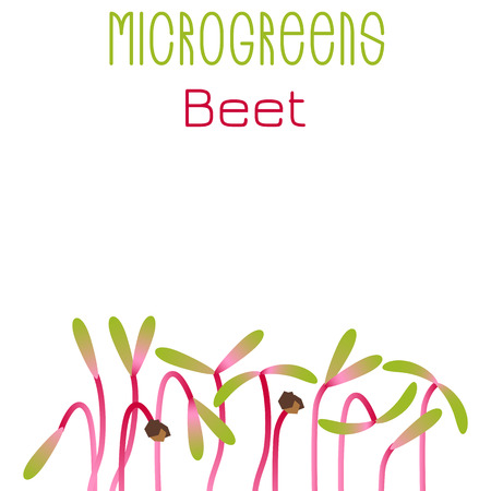 Microgreens Beet. Seed packaging design. Sprouting seeds of a plant. Vitamin supplement, vegan food Çizim