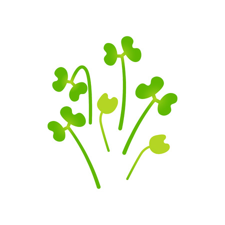 Microgreens Broccoli. Bunch of plants. Vitamin supplement, vegan food