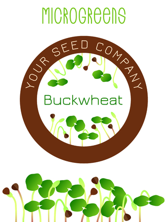 Microgreens Buckwheat. Seed packaging design, round element in the center. Sprouting seeds of a plant. Vitamin supplement, vegan food