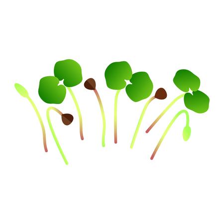 Microgreens Buckwheat. Bunch of plants. Vitamin supplement, vegan food