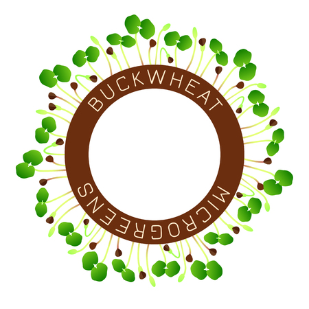 Microgreens Buckwheat. Seed packaging design, round element in the center. Around him sprouts. Vitamin supplement, vegan food