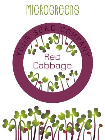 Cavolo Rosso Microgreens. Design della confezione del seme, elemento rotondo al centro. Germogliare i semi di una pianta. Integratore vitaminico, cibo vegano