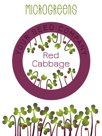Microgreens Red Cabbage. Seed packaging design, round element in the center. Sprouting seeds of a plant. Vitamin supplement, vegan food