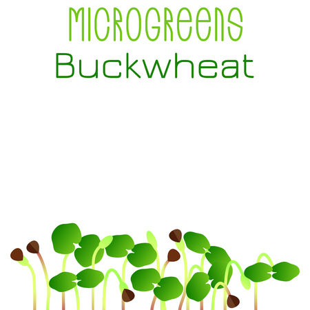 Microgreens Buckwheat. Seed packaging design. Sprouting seeds of a plant. Vitamin supplement, vegan food Foto de archivo - 124416145