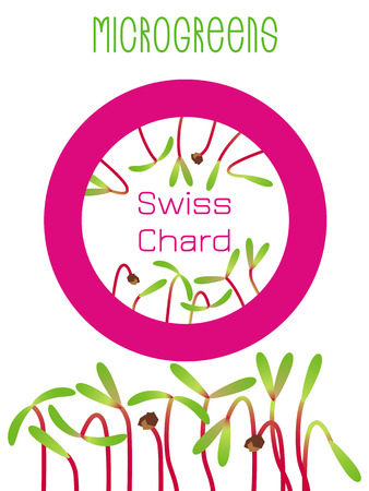Microgreens Swiss Chard. Seed packaging design, round element in the center. Sprouting seeds of a plant. Vitamin supplement, vegan food