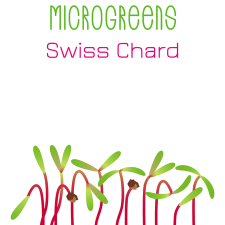 Microgreens Swiss Chard. Seed packaging design. Sprouting seeds of a plant. Vitamin supplement, vegan food