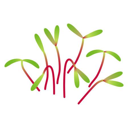 Microgreens Swiss Chard. Bunch of plants. Vitamin supplement, vegan food
