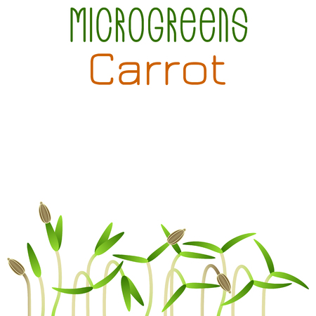 Microgreens Carrot. Seed packaging design. Sprouting seeds of a plant. Vitamin supplement, vegan food
