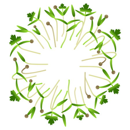 Microgreens Cilantro. Arranged in a circle. Vitamin supplement, vegan food